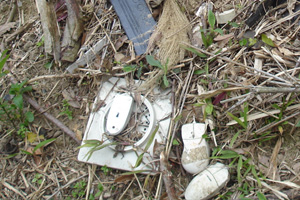 mouse burial ground